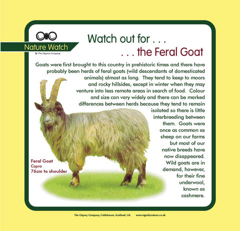 'Feral goat' Nature Watch Panel