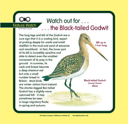 'Black-tailed godwit' Nature Watch Panel