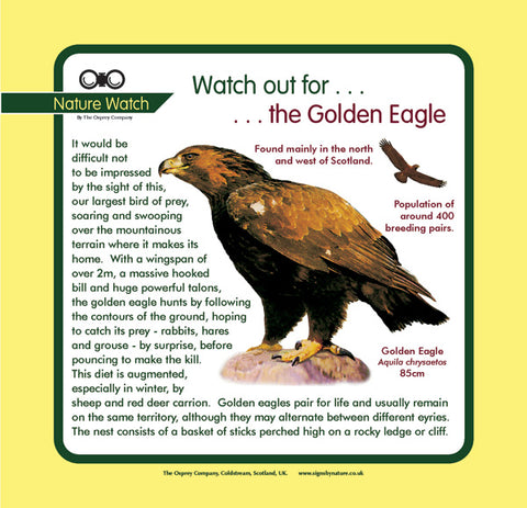 'Golden eagle' Nature Watch Panel