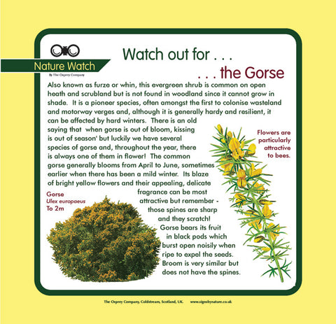 'Gorse' Nature Watch Panel