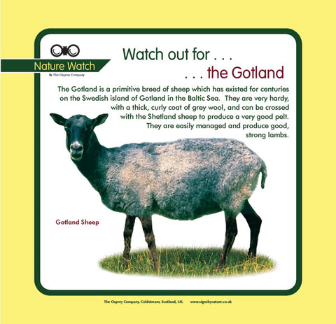 'Gotland sheep' Nature Watch Panel