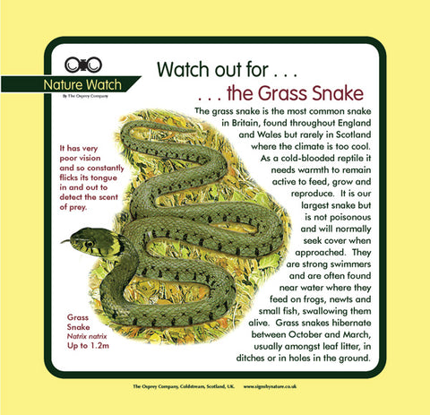 'Grass snake' Nature Watch Panel