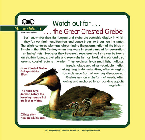 'Great crested grebe' Nature Watch Panel