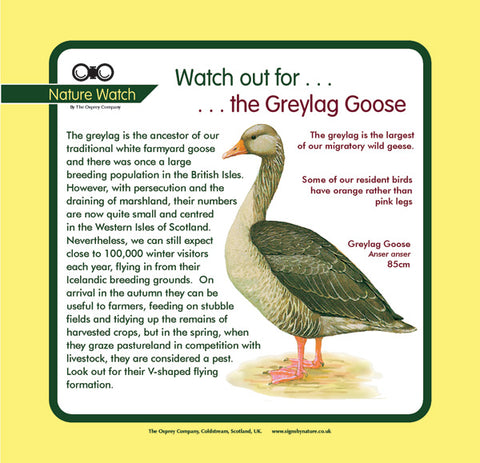 'Greylag goose' Nature Watch Panel