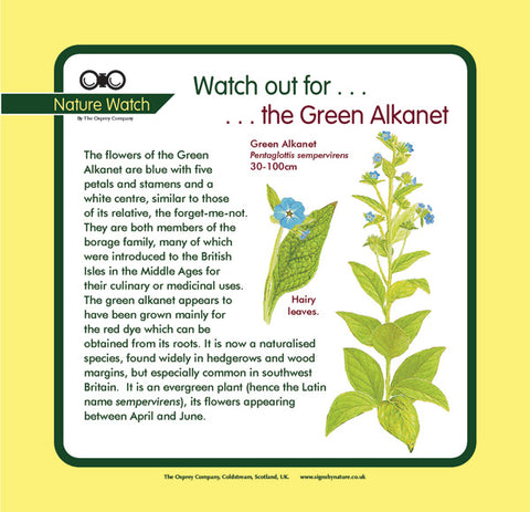 'Green alkanet' Nature Watch Panel