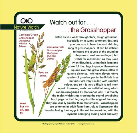 'Grasshopper' Nature Watch Panel