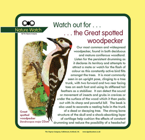 'Great spotted woodpecker' Nature Watch Panel