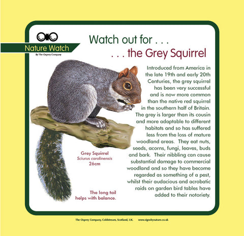 'Grey squirrel' Nature Watch Panel