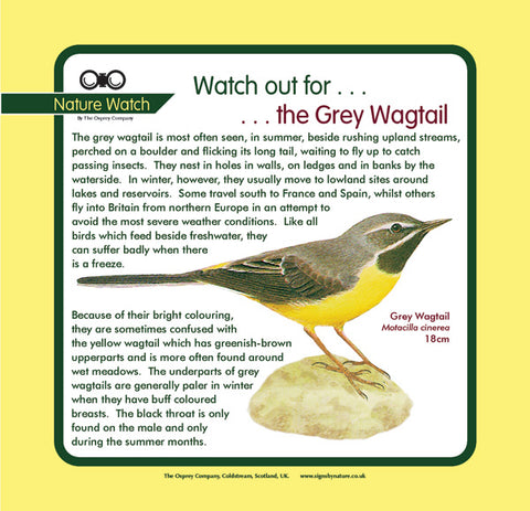 'Grey wagtail' Nature Watch Panel
