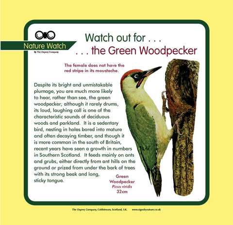 'Green woodpecker' Nature Watch Panel