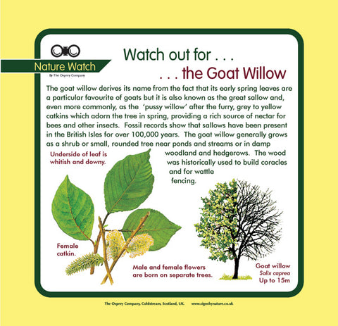 'Goat willow' Nature Watch Panel