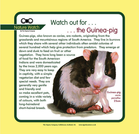 'Guinea pig' Nature Watch Panel