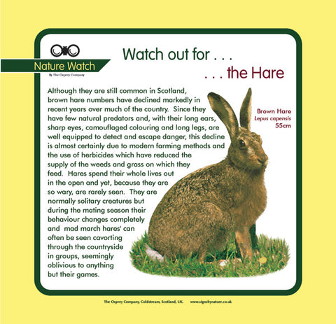 'Hare' Nature Watch Panel