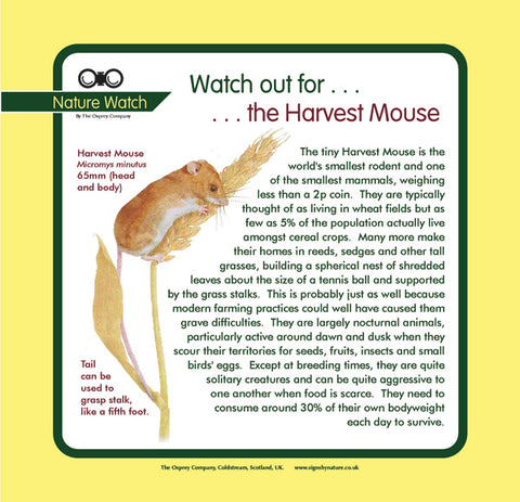 'Harvest mouse' Nature Watch Panel