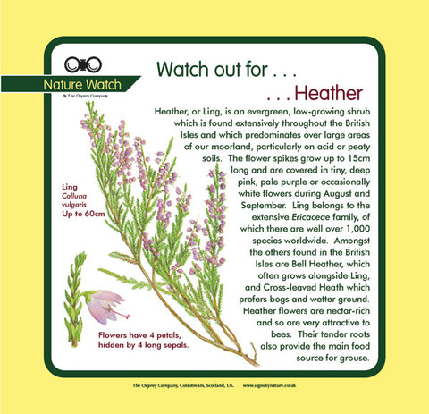 'Heather' Nature Watch Panel