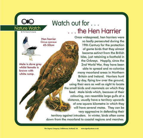 'Hen harrier' Nature Watch Panel