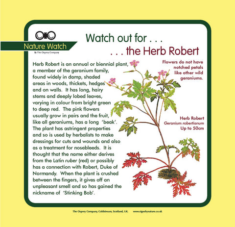 'Herb robert' Nature Watch Panel