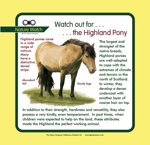 'Highland pony' Nature Watch Panel