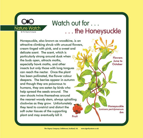 'Honeysuckle' Nature Watch Panel