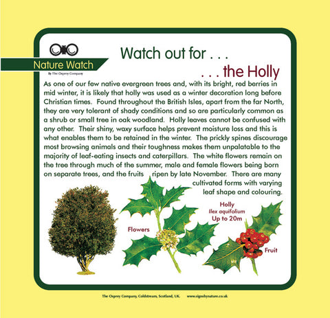 'Holly' Nature Watch Panel