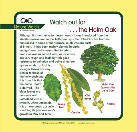 'Holm oak' Nature Watch Panel