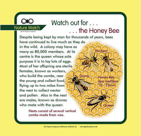 'Honey bee' Nature Watch Panel