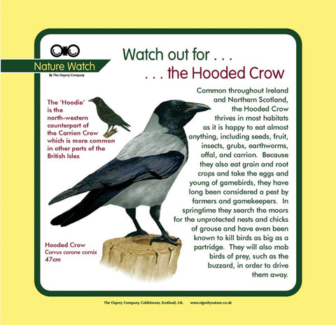 'Hooded crow' Nature Watch Panel