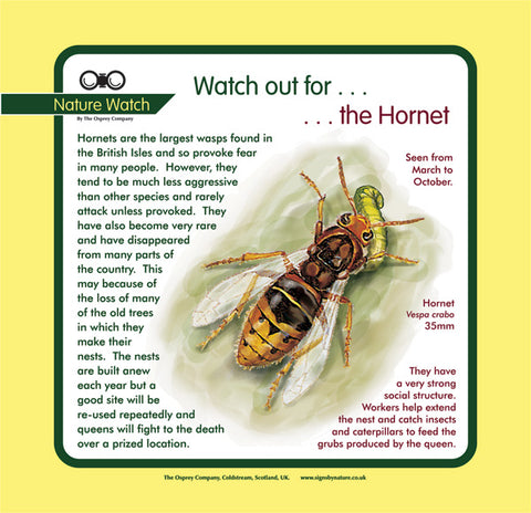 'Hornet' Nature Watch Panel
