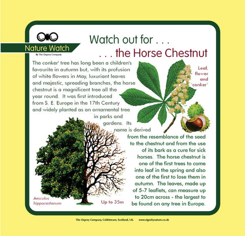 'Horsechestnut' Nature Watch Panel