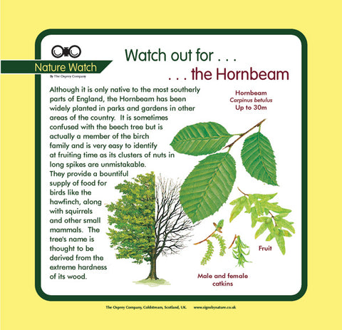 'Hornbeam' Nature Watch Panel