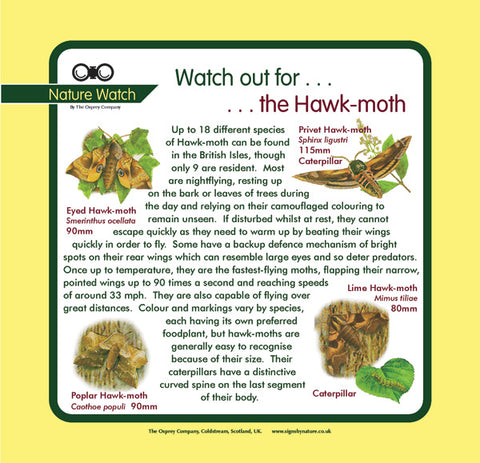 'Hawk moth' Nature Watch Panel