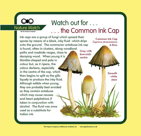 'Common ink cap' Nature Watch Panel