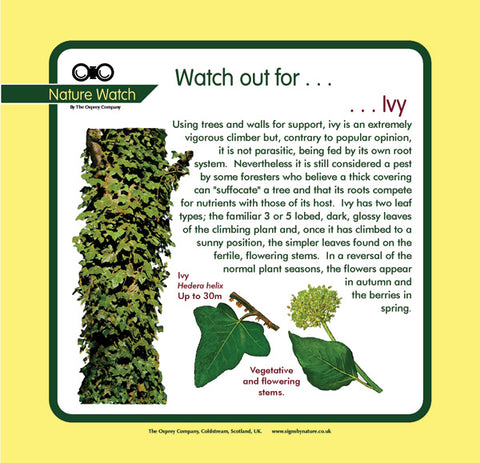 'Ivy' Nature Watch Panel