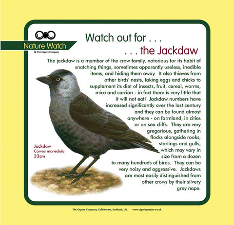 'Jackdaw' Nature Watch Panel