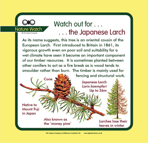 'Japanese larch' Nature Watch Panel