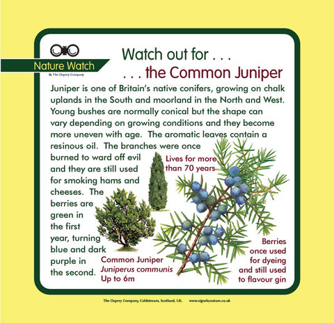 'Juniper' Nature Watch Panel