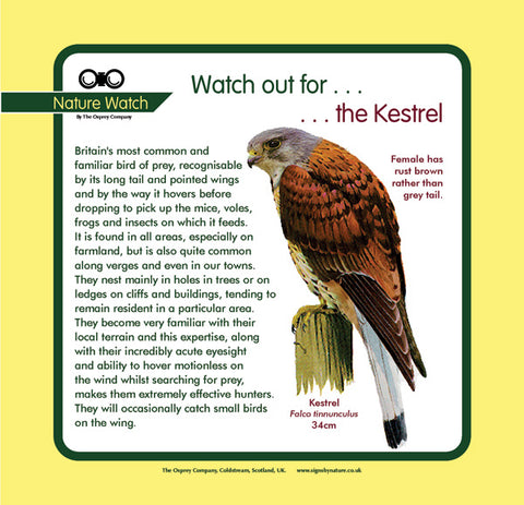 'Kestrel' Nature Watch Panel