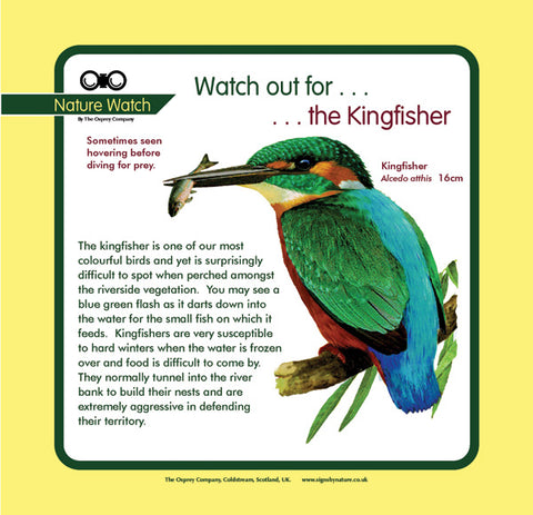 'Kingfisher' Nature Watch Panel