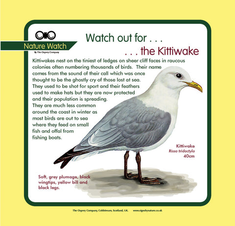 'Kittiwake' Nature Watch Panel