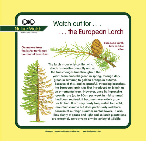 'European larch' Nature Watch Panel