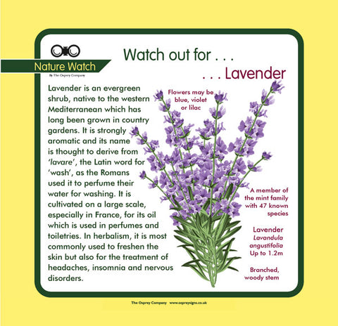 'Lavender' Nature Watch Panel