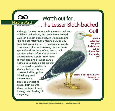 'Lesser black-backed gull' Nature Watch Panel