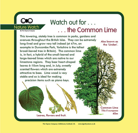 'Common lime' Nature Watch Panel