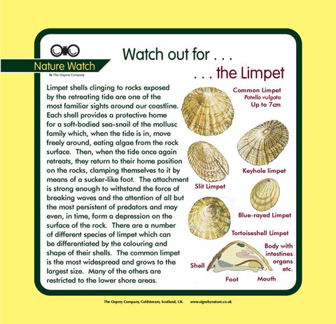 'Limpet' Nature Watch Panel