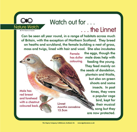 'Linnet' Nature Watch Panel