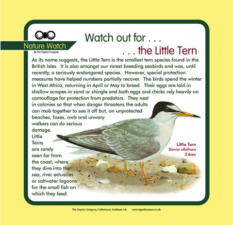 'Little tern' Nature Watch Panel