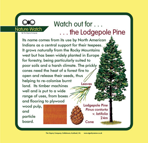 'Lodgepole pine' Nature Watch Panel