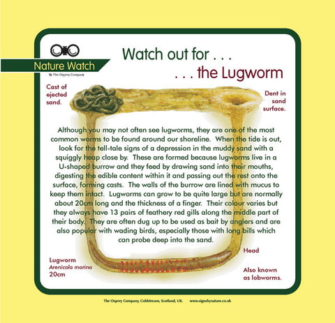 'Lugworm' Nature Watch Panel