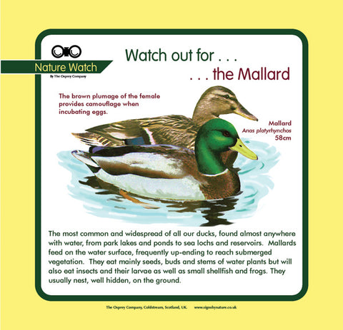 'Mallard' Nature Watch Panel