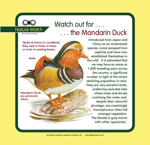 'Mandarin duck' Nature Watch Panel